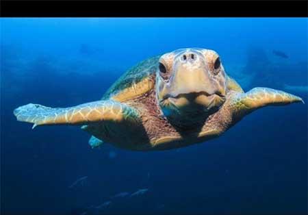اخبار,اخبارگوناگون,تصاویر زیبااز لاکپشت