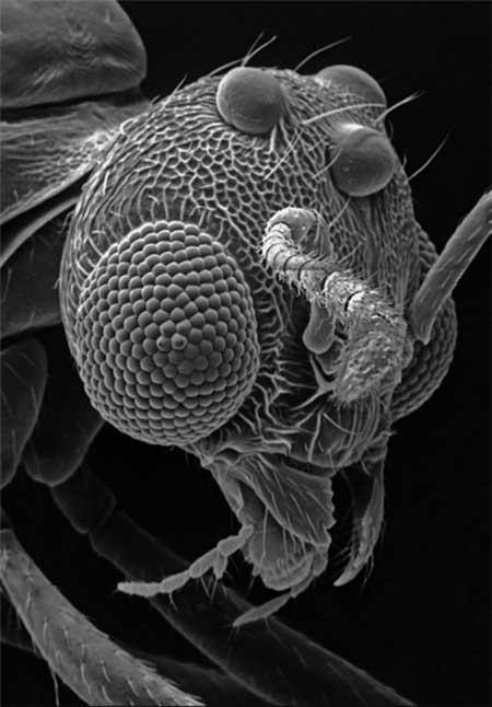 اخبار,اخبارگوناگون, تصاویر جالب میکروسکوپی