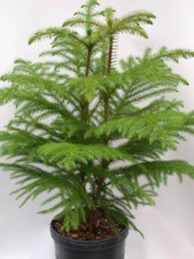 پرورش گیاهان زینتی,گل و گیاهان آپارتمانی,گلها و گیاهان زینتی