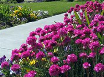 گیاهان زینتی,پرورش گیاهان زینتی,گیاهان آپارتمانی