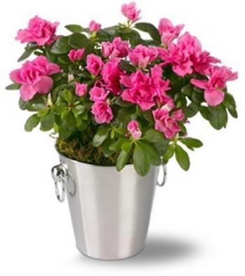 انواع گیاهان آپارتمانی,گل و گیاهان زینتی,پرورش گیاهان زینتی