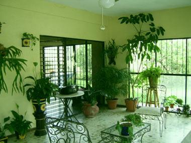 گلهای آپارتمانی,گیاهان آپارتمانی,آفات گیاهی