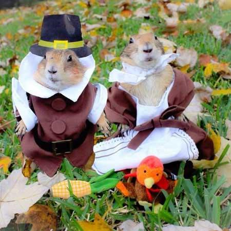 زندگی خانوادگی دو سنجاب معروف