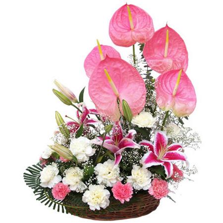 سبد گل,سبد گل زیبا,گالری عکس سبد گل