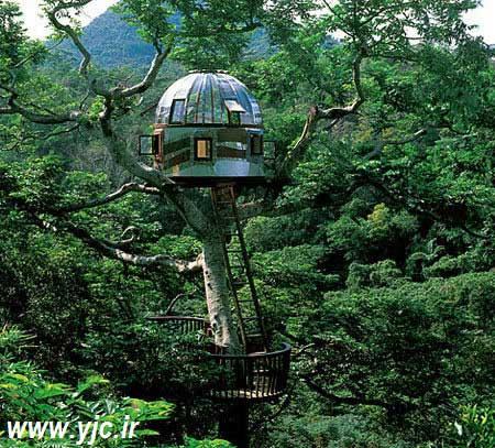 جالب ترین خانه درختی های دنیا